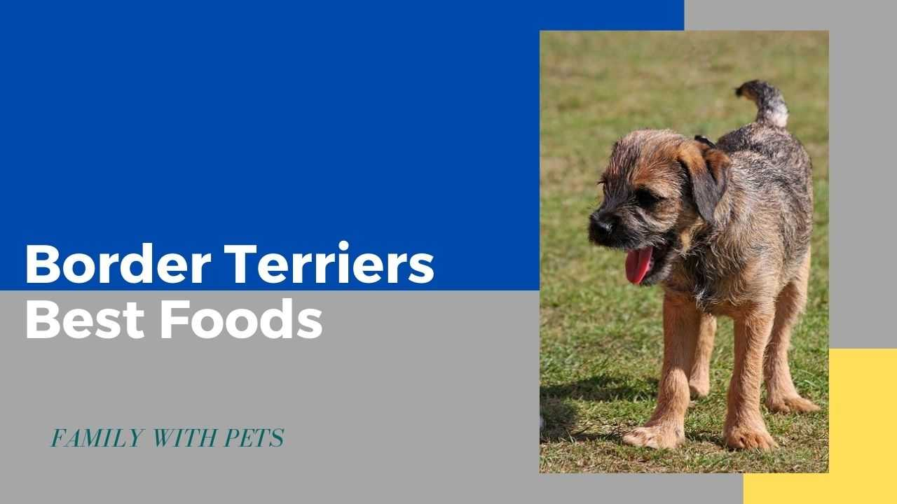 Best Dog Food For Border Terriers